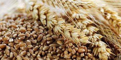 Hvad er fuldkorn og hvorfor er det sundt?