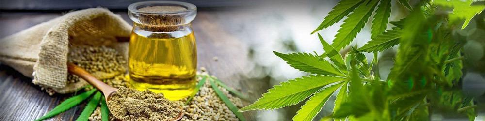 Hvad er cannabis olie